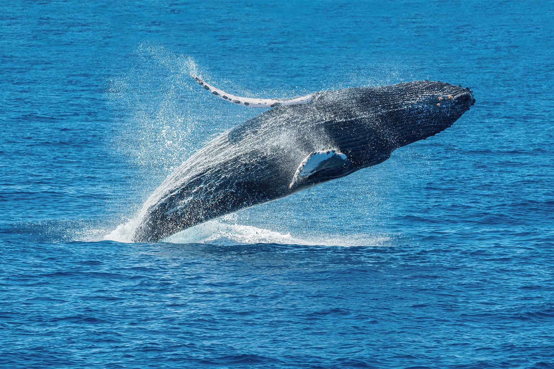 Homepage-Slider-Humpback-Whale-1920px