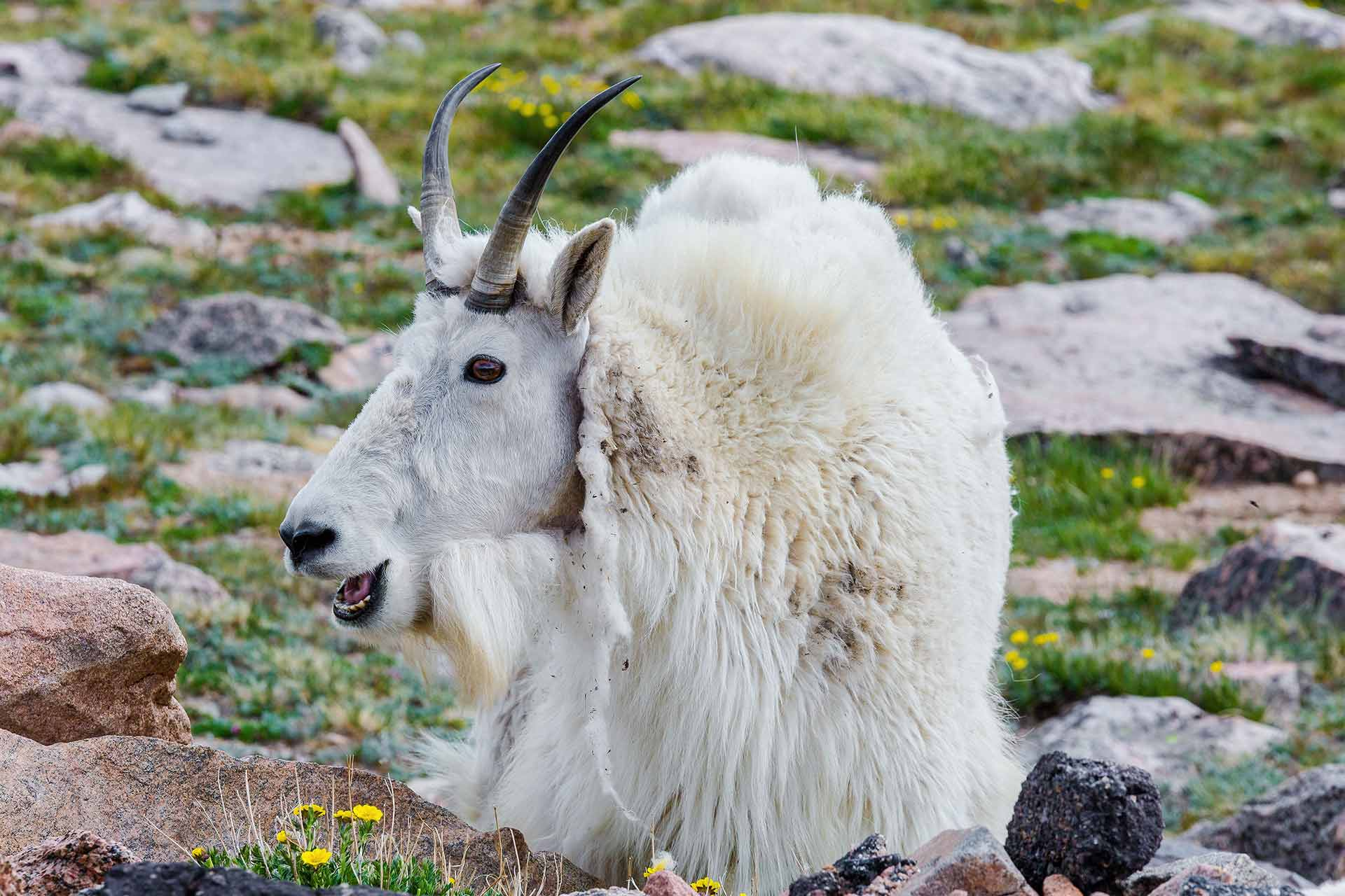 Homepage-Slider-The-GOAT-1920px